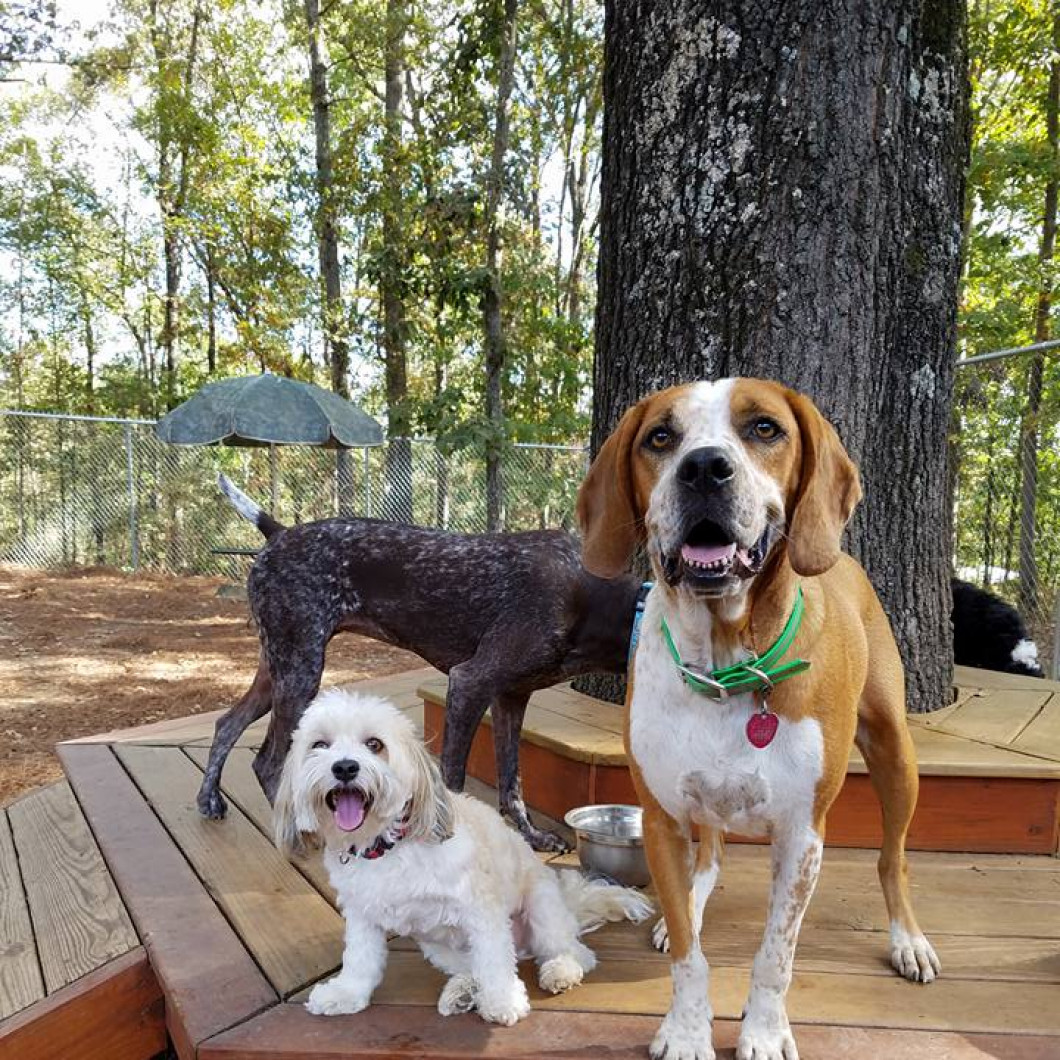 We're just woofing around at Hot Diggity Doggie Camp