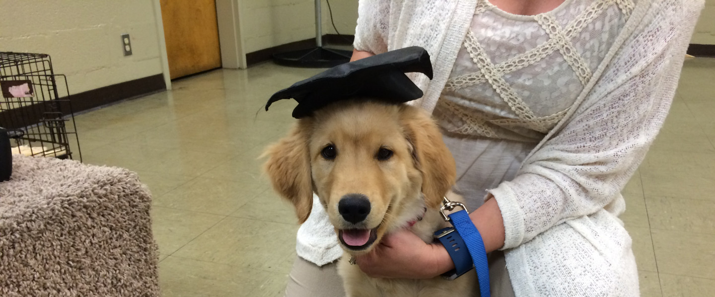 Puppy Kindergarten will resume on Monday, June 8th